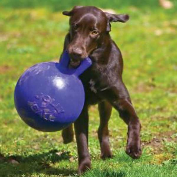 Jolly Ball For Large Dogs